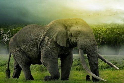 You are currently viewing বৃহত্তম প্রাণী হাতীর অজানা কিছু তথ্য জেনে নিন।