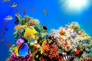 Read more about the article ১০ প্রজাতির যে মাছগুলো অ্যাকুরিয়ামে রাখতে পারেন…….