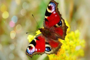 Read more about the article ৯ টি সুন্দর প্রজাপতি বেঁচে থাকা সম্পর্কে সত্য ঘটনা