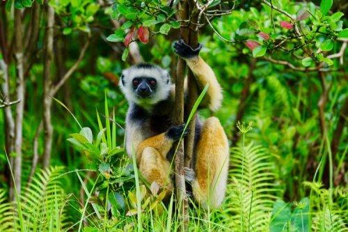 You are currently viewing বিশ্বের রোমাঞ্চকর ৯টি প্রাণীর ইতিকথা