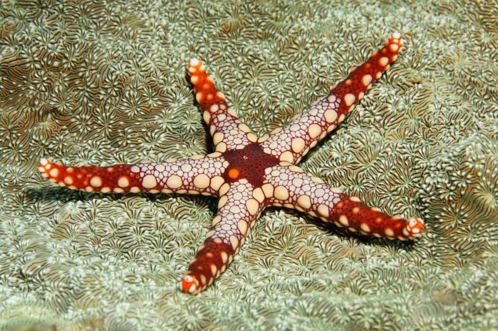 star fish তারা মাছ