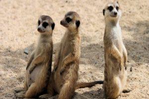 Read more about the article লাজুক প্রাণীদের সম্পর্কে নির্বাক করা তথ্য