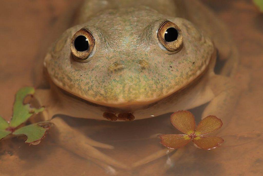 Frog ব্যাঙ