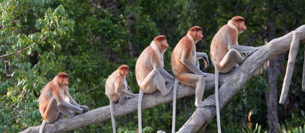 monkey socialism