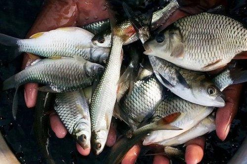 You are currently viewing বাংলাদেশের মিঠা পানির সুস্বাদু মাছ