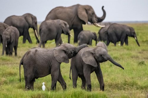 Read more about the article সবচেয়ে বড় প্রানী হাতি সম্পর্কে চাঞ্চল্যকর তথ্য