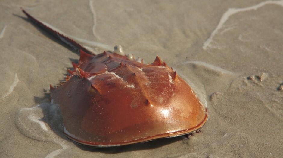 Crabs কাকড়া