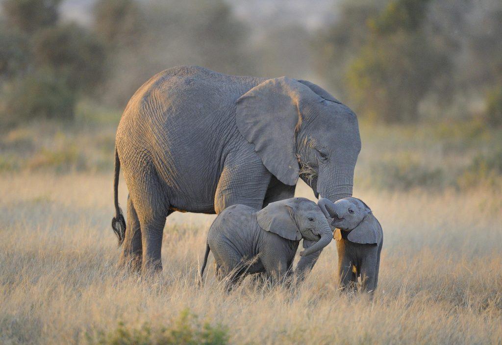 পশুঃ হাতি ( Elephant )