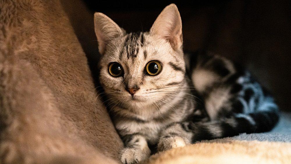 Cat বিড়াল