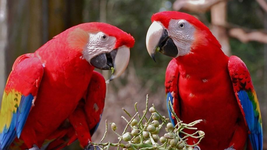 macaw bangladesh