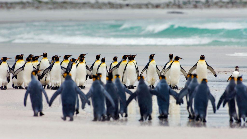 পেঙ্গুইন ( penguin )
