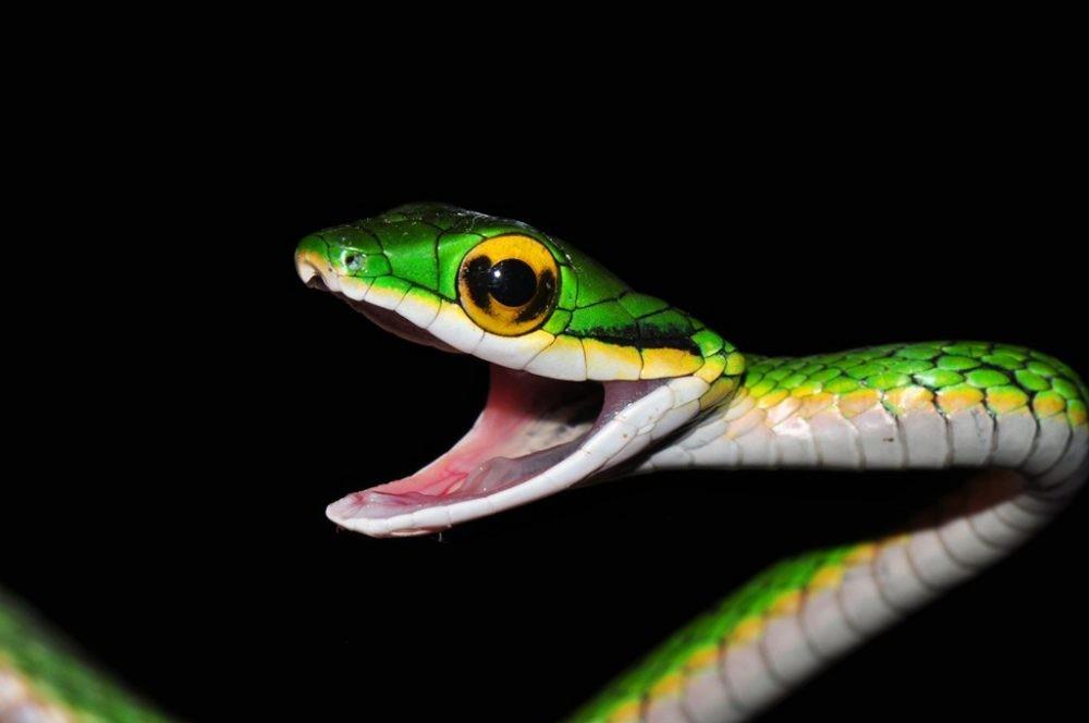 snake সাপ ( মানুষ )