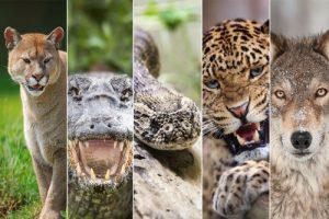 Read more about the article জেনে নিন সবচেয়ে বেশি বিপজ্জনক ৮টি প্রাণী সম্পর্কে