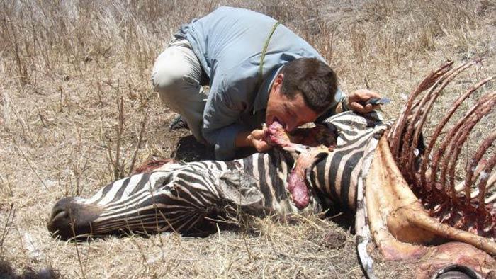 Zebra Eating (Bear Grylls )