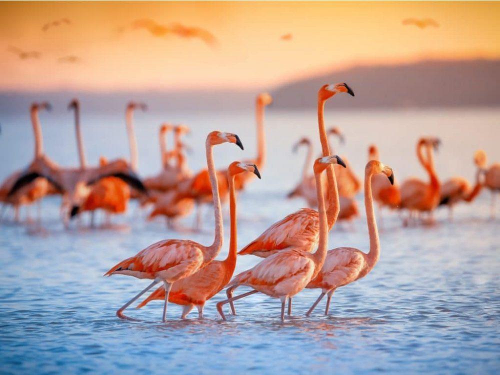Flamingo ফ্লেমিংগো