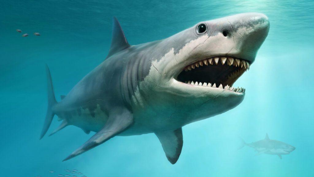 Shark হাঙর