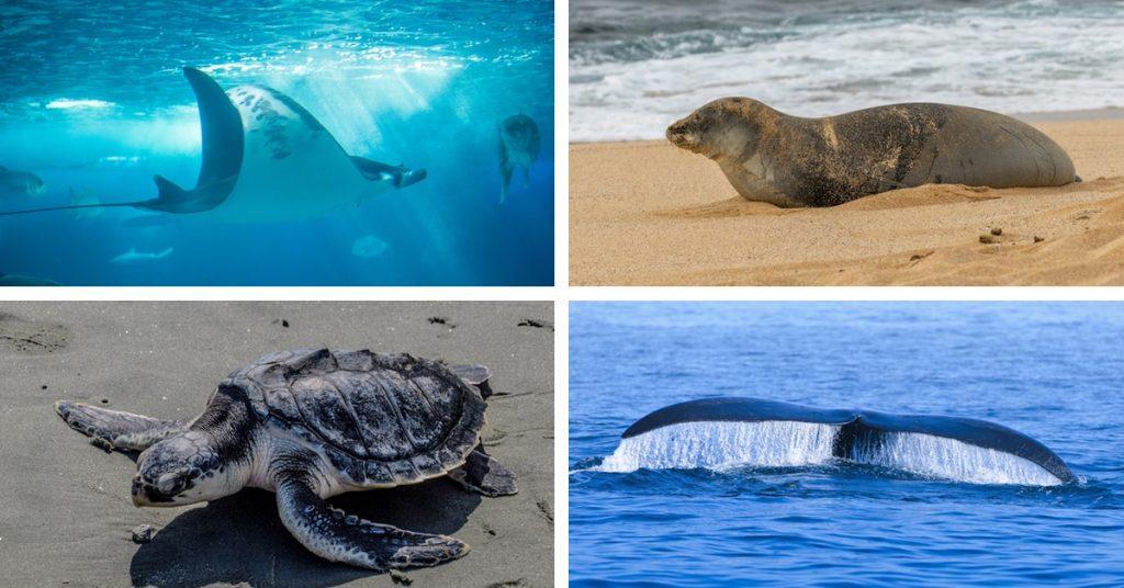 Endangered Marine Animals বিপন্ন