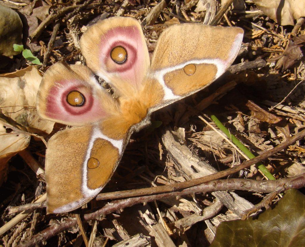 Moth Madagascar