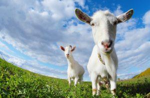 """কিভাবে প্রানীগুলো মানুষকে """"এপ্রিল ফুল"""" বানালো বিস্তারিত পড়ুন……"""