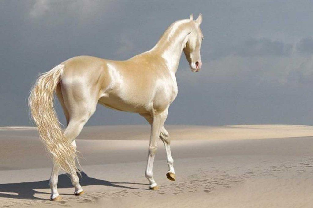 আকেল টেক হর্স ( Akel tekh Horse)