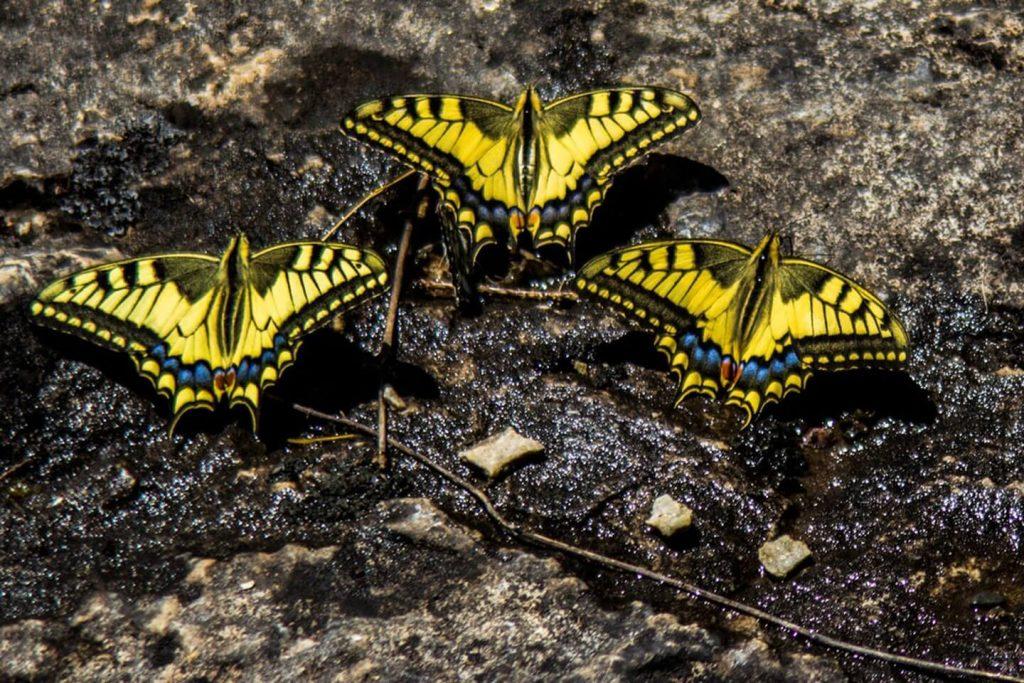 Butterfly প্রজাপতি