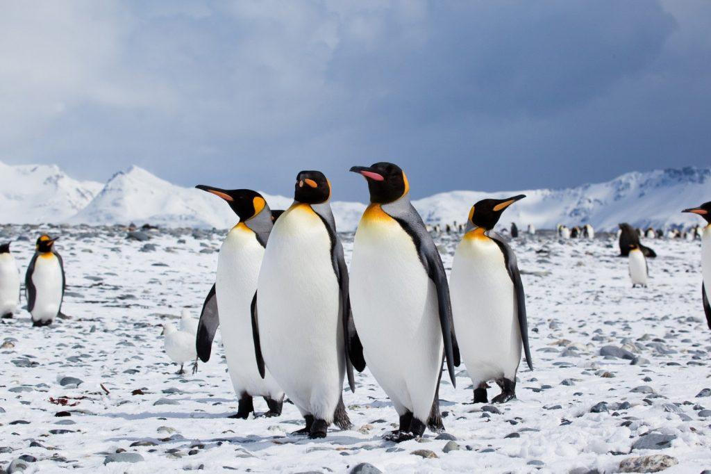 penguin ( রোমাঞ্চকর পেঙ্গুইন )