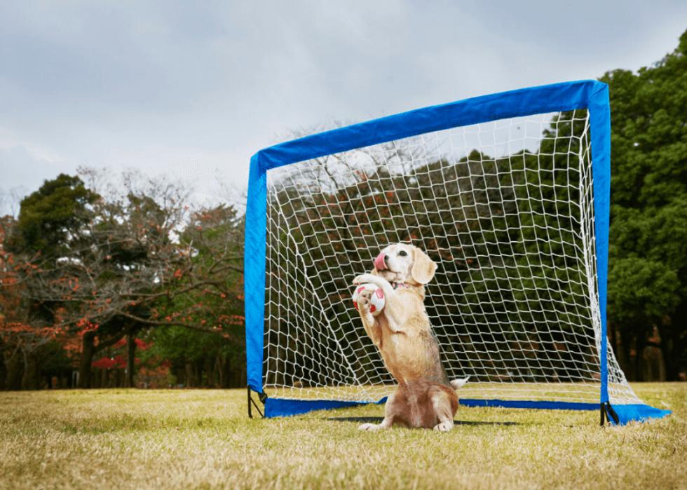 Dog বিশ্বস্ত কুকুর