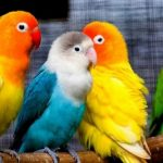 pet animals পোষা প্রানী