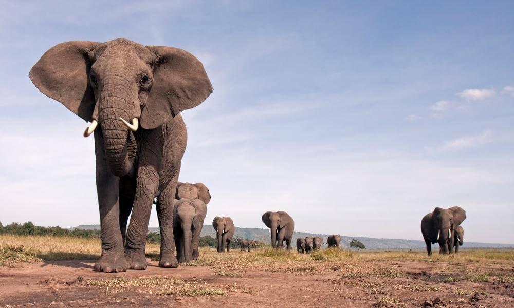 বন্য প্রানী হাতি Elephant