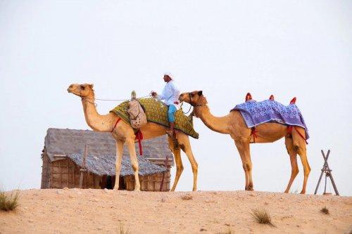 বিলাসবহুল শহর দুবাই, এ যেসব বন্য প্রানী বাস করে