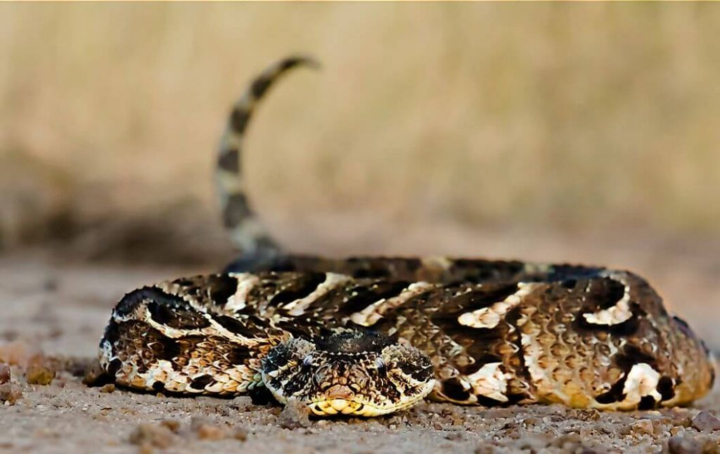 top 10 poisonous snake