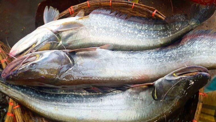 বোয়াল মাছ