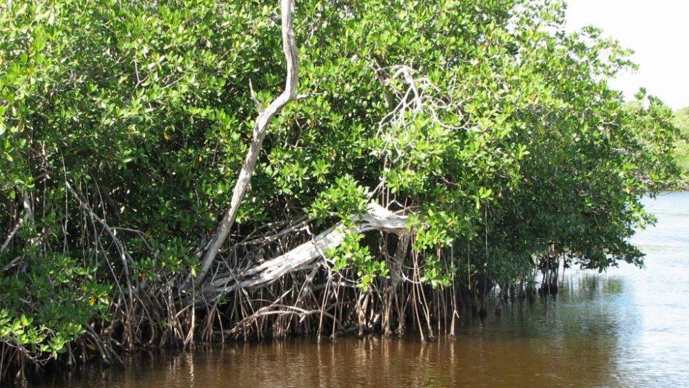 Sundarban সুন্দরবন
