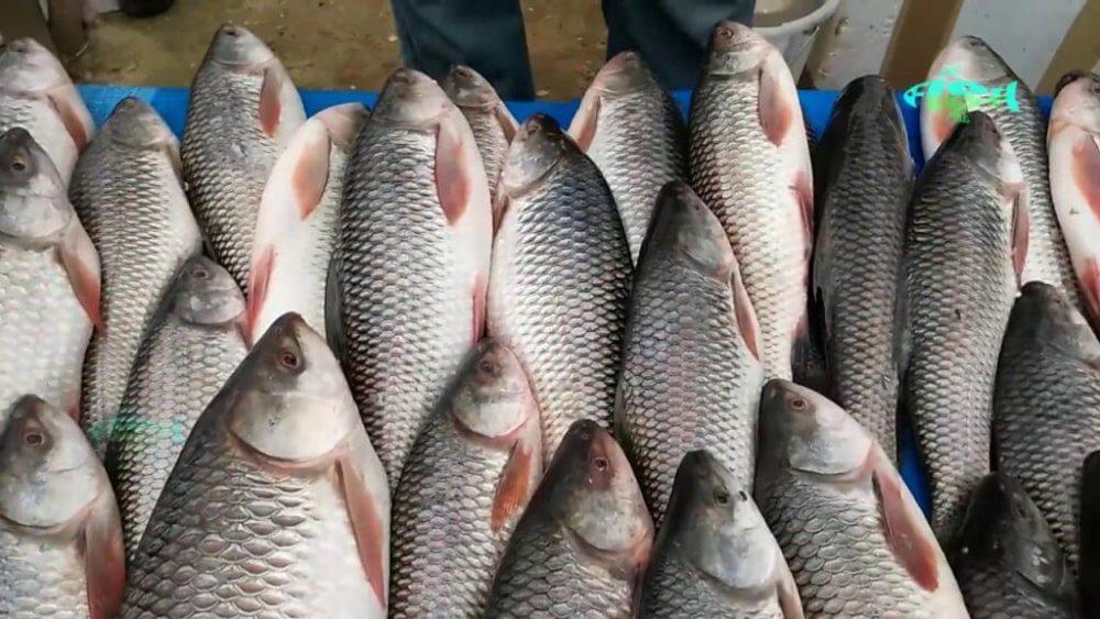 রুই মাছ