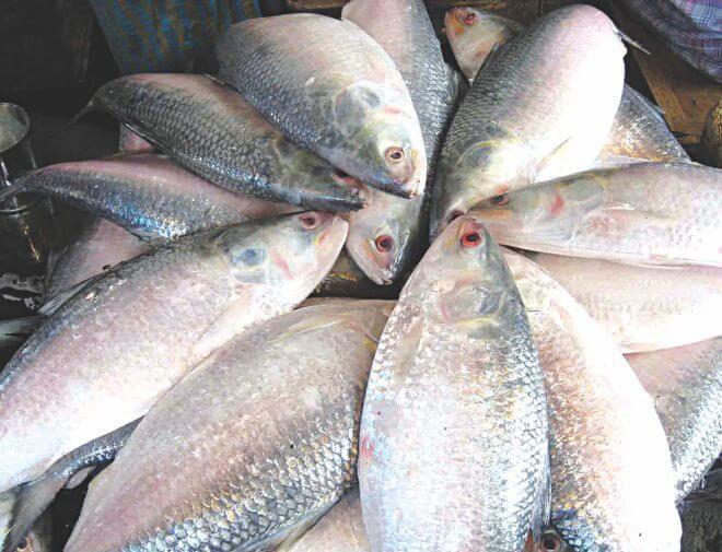সুস্বাদু মাছ