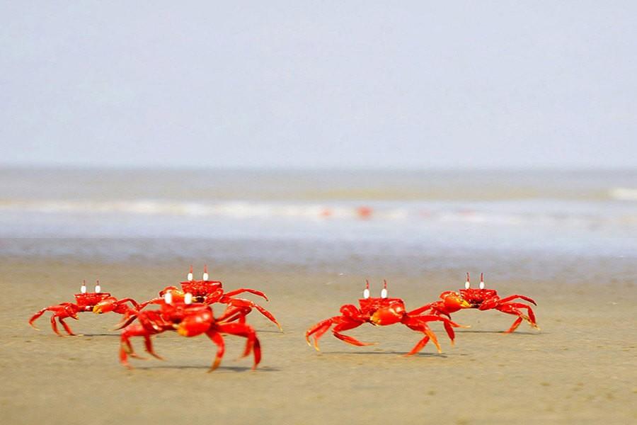 কাকড়া Crabs
